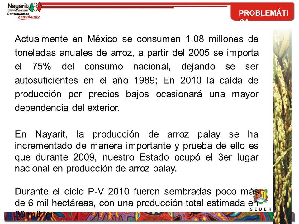 La Secretaria de Economía ha desprotegido al sector arrocero nacional, permitiendo la importación de arroz a precios muy por debajo del costo de producción nacional, provocando así el Dumping.