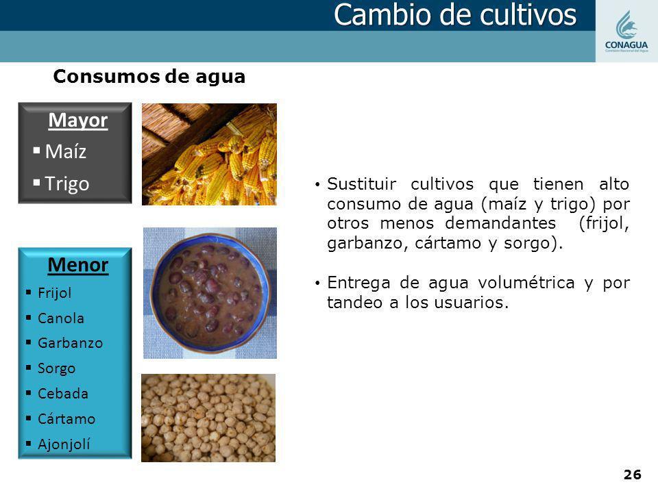 Menor Frijol Canola Garbanzo Sorgo Cebada Cártamo Ajonjolí Mayor Maíz Trigo Consumos de agua Sustituir cultivos que tienen alto consumo de agua (maíz