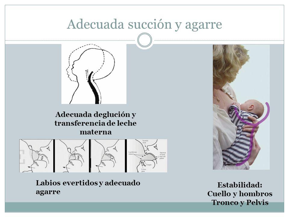 Estabilidad: Cuello y hombros Tronco y Pelvis Adecuada deglución y transferencia de leche materna Labios evertidos y adecuado agarre Adecuada succión y agarre