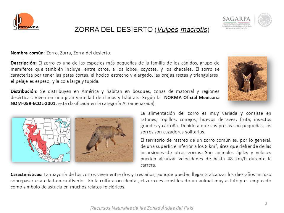 3 Nombre común: Zorro, Zorra, Zorra del desierto. Descripción: El zorro es una de las especies más pequeñas de la familia de los cánidos, grupo de mam