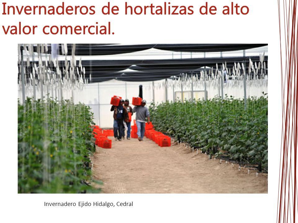 Invernadero Ejido Hidalgo, Cedral
