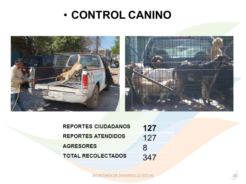 CONTROL CANINO REPORTES CIUDADANOS 127 REPORTES ATENDIDOS 127 AGRESORES 8 TOTAL RECOLECTADOS 347 16SECRETARÍA DE DESARROLLO SOCIAL