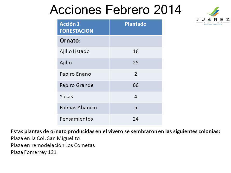Acciones Febrero 2014 Acción 1 FORESTACION Plantado Ornato : Ajillo Listado16 Ajillo25 Papiro Enano2 Papiro Grande66 Yucas4 Palmas Abanico5 Pensamient