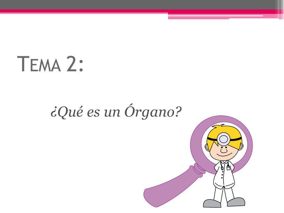 T EMA 2: ¿Qué es un Órgano?
