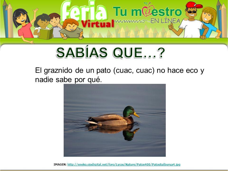 El graznido de un pato (cuac, cuac) no hace eco y nadie sabe por qué. IMAGEN: http://eneko.ojodigital.net/foro/Lycos/Nature/Patos400/PatosSalburua4.jp