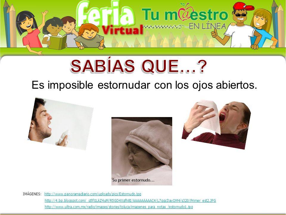 Es imposible estornudar con los ojos abiertos. IMÁGENES: http://www.panoramadiario.com/uploads/pics/Estornudo.jpghttp://www.panoramadiario.com/uploads