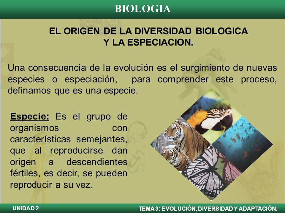 BIOLOGIA TEMA 3: EVOLUCIÓN, DIVERSIDAD Y ADAPTACIÓN. UNIDAD 2 EL ORIGEN DE LA DIVERSIDAD BIOLOGICA Y LA ESPECIACION. Una consecuencia de la evolución