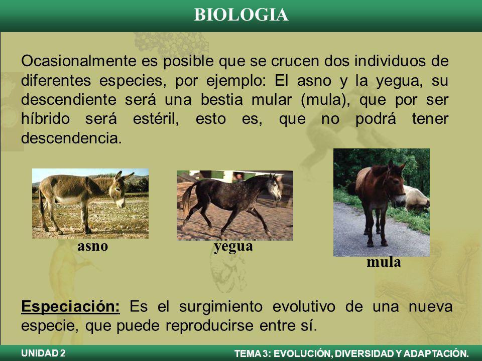BIOLOGIA TEMA 3: EVOLUCIÓN, DIVERSIDAD Y ADAPTACIÓN. UNIDAD 2 Ocasionalmente es posible que se crucen dos individuos de diferentes especies, por ejemp