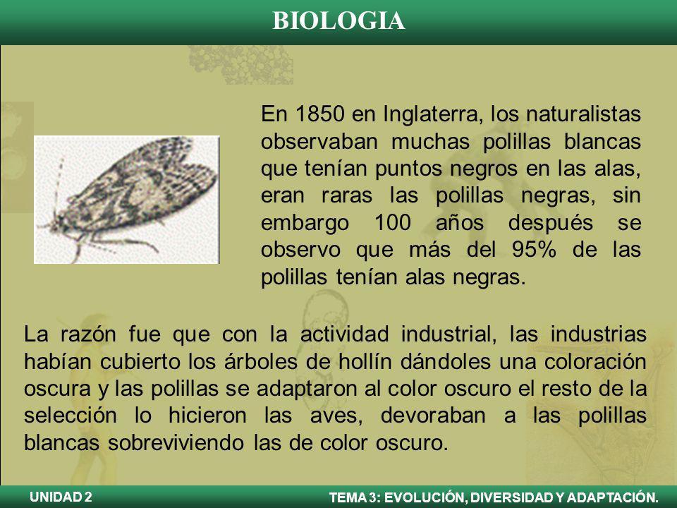 BIOLOGIA TEMA 3: EVOLUCIÓN, DIVERSIDAD Y ADAPTACIÓN. UNIDAD 2 En 1850 en Inglaterra, los naturalistas observaban muchas polillas blancas que tenían pu