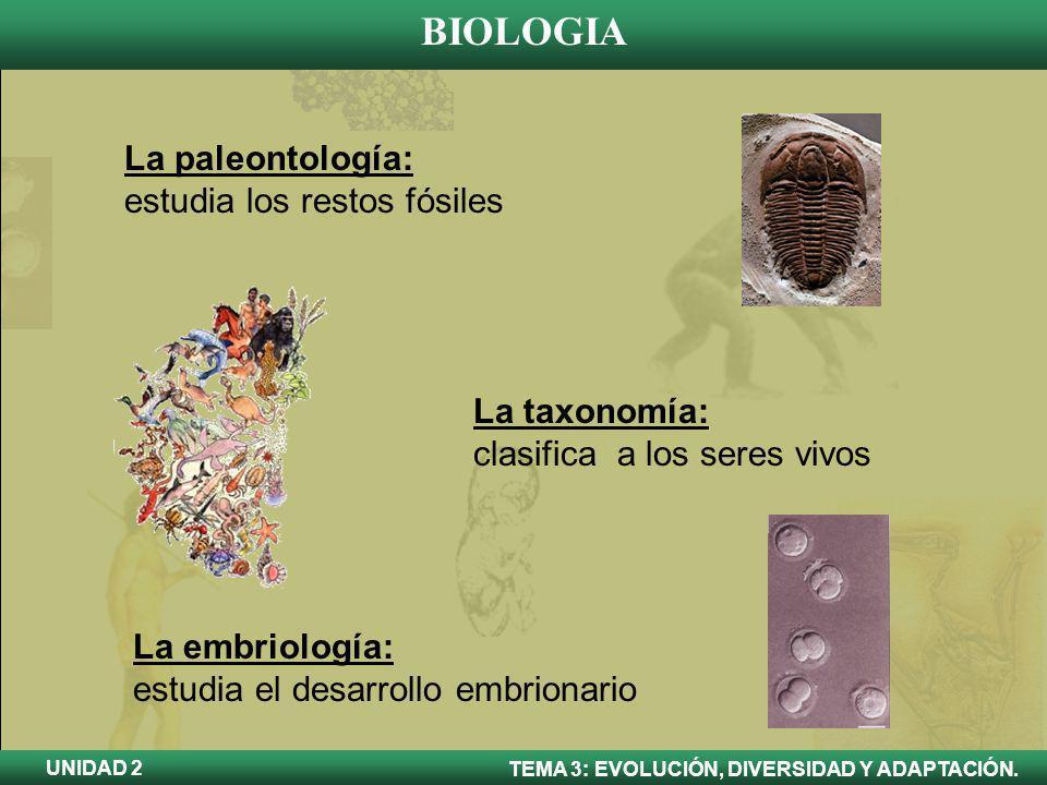 BIOLOGIA TEMA 3: EVOLUCIÓN, DIVERSIDAD Y ADAPTACIÓN. UNIDAD 2 La paleontología: estudia los restos fósiles La taxonomía: clasifica a los seres vivos L