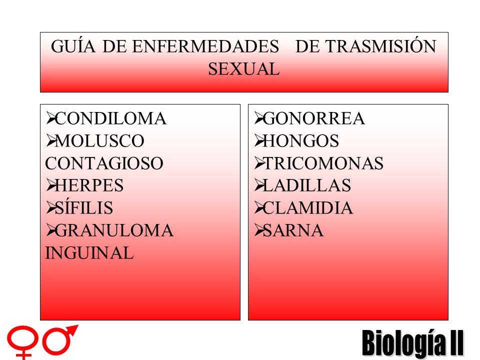 GUÍA DE ENFERMEDADES DE TRASMISIÓN SEXUAL CONDILOMA MOLUSCO CONTAGIOSO HERPES SÍFILIS GRANULOMA INGUINAL GONORREA HONGOS TRICOMONAS LADILLAS CLAMIDIA SARNA