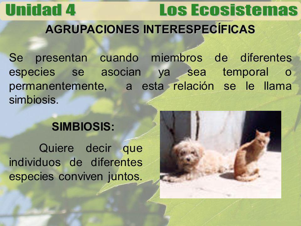 AGRUPACIONES INTERESPECÍFICAS Se presentan cuando miembros de diferentes especies se asocian ya sea temporal o permanentemente, a esta relación se le