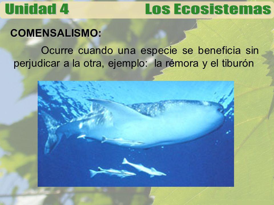 COMENSALISMO: Ocurre cuando una especie se beneficia sin perjudicar a la otra, ejemplo: la rémora y el tiburón