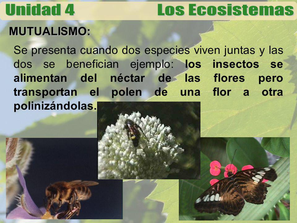 MUTUALISMO: Se presenta cuando dos especies viven juntas y las dos se benefician ejemplo: los insectos se alimentan del néctar de las flores pero tran