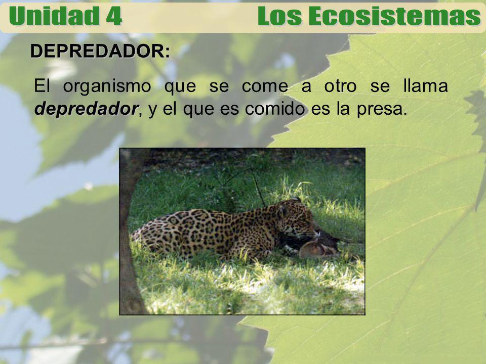 DEPREDADOR: depredador El organismo que se come a otro se llama depredador, y el que es comido es la presa.
