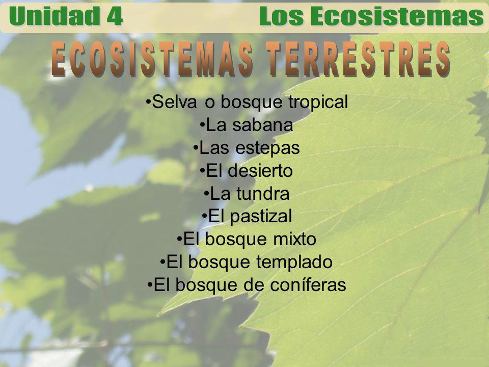 Selva o bosque tropical La sabana Las estepas El desierto La tundra El pastizal El bosque mixto El bosque templado El bosque de coníferas