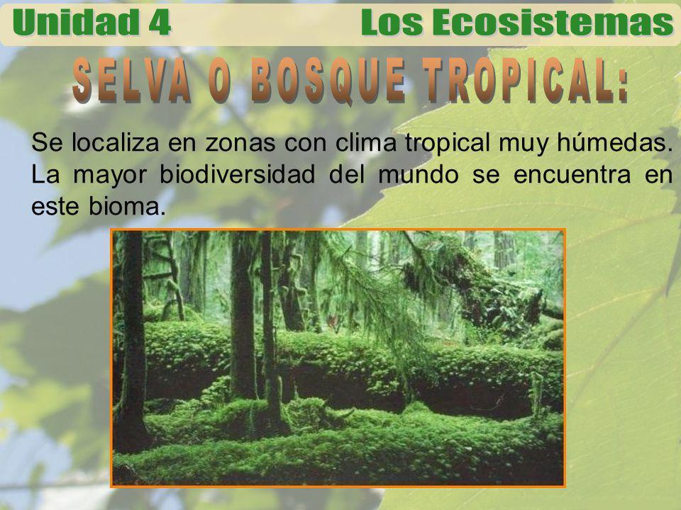 Se localiza en zonas con clima tropical muy húmedas. La mayor biodiversidad del mundo se encuentra en este bioma.