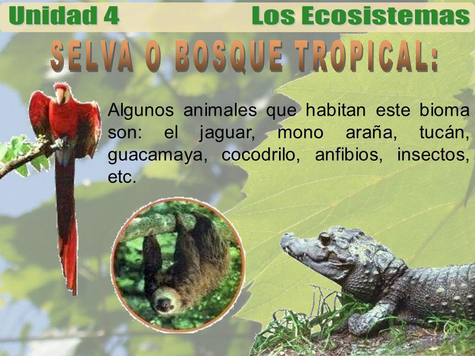Se caracteriza por largos periodos de sequía.