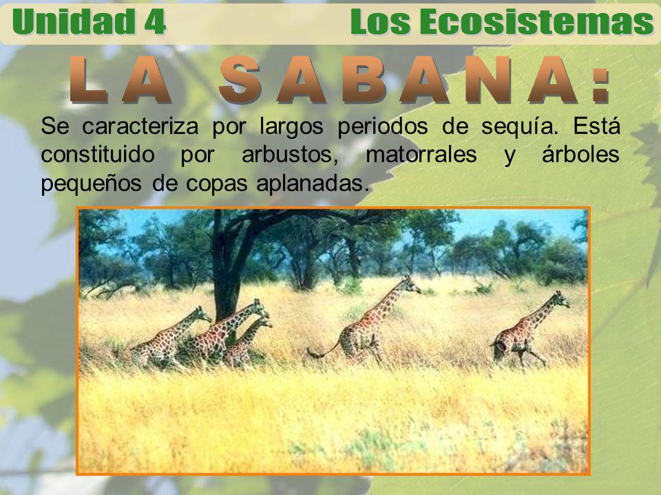 En este ecosistema habitan los animales mas grandes del mundo como: las jirafas, antílopes, bisontes, cebras, gacelas, león, chetta o guepardo, leopardo.
