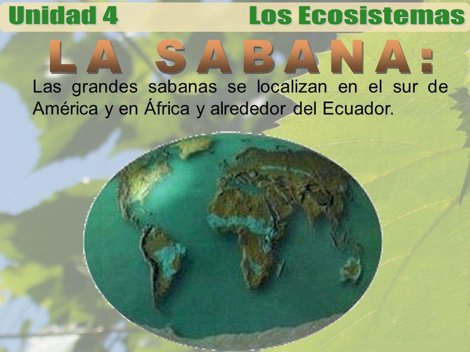 Las grandes sabanas se localizan en el sur de América y en África y alrededor del Ecuador.