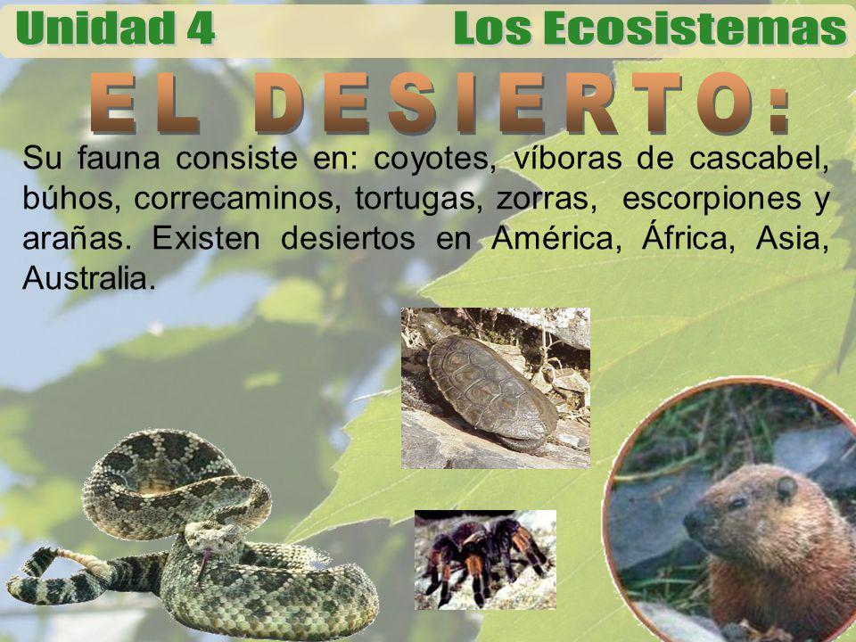 Su fauna consiste en: coyotes, víboras de cascabel, búhos, correcaminos, tortugas, zorras, escorpiones y arañas. Existen desiertos en América, África,