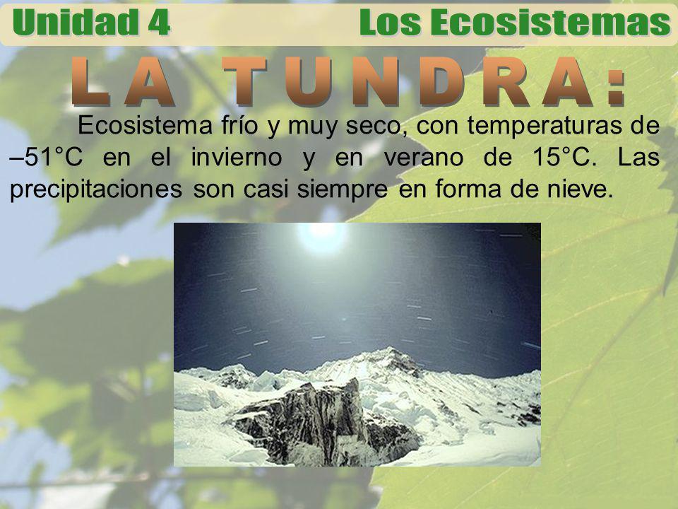 Ecosistema frío y muy seco, con temperaturas de –51°C en el invierno y en verano de 15°C. Las precipitaciones son casi siempre en forma de nieve.