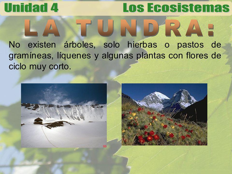 Su fauna consiste en: el caribú, toro almizclero, reno, liebre ártica, zorro y lobo ártico, etc.