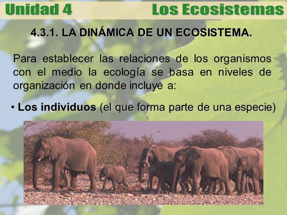 4.3.1. LA DINÁMICA DE UN ECOSISTEMA. Para establecer las relaciones de los organismos con el medio la ecología se basa en niveles de organización en d