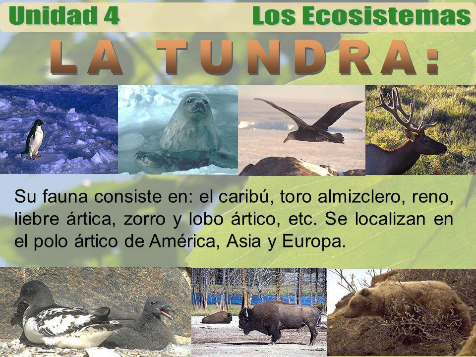 Su fauna consiste en: el caribú, toro almizclero, reno, liebre ártica, zorro y lobo ártico, etc. Se localizan en el polo ártico de América, Asia y Eur