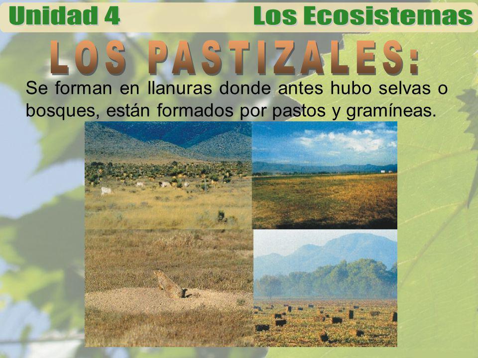 Se forman en llanuras donde antes hubo selvas o bosques, están formados por pastos y gramíneas.