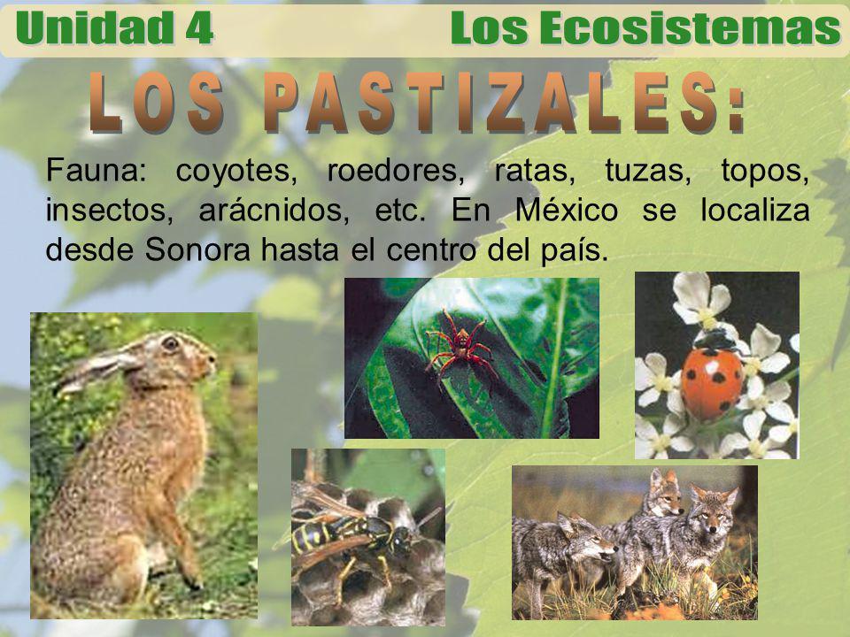 Fauna: coyotes, roedores, ratas, tuzas, topos, insectos, arácnidos, etc. En México se localiza desde Sonora hasta el centro del país.