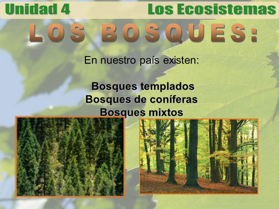 En nuestro país existen: Bosques templados Bosques de coníferas Bosques mixtos