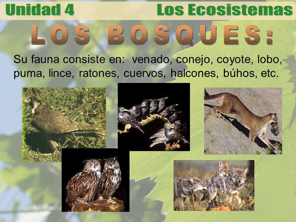 Su fauna consiste en: venado, conejo, coyote, lobo, puma, lince, ratones, cuervos, halcones, búhos, etc.