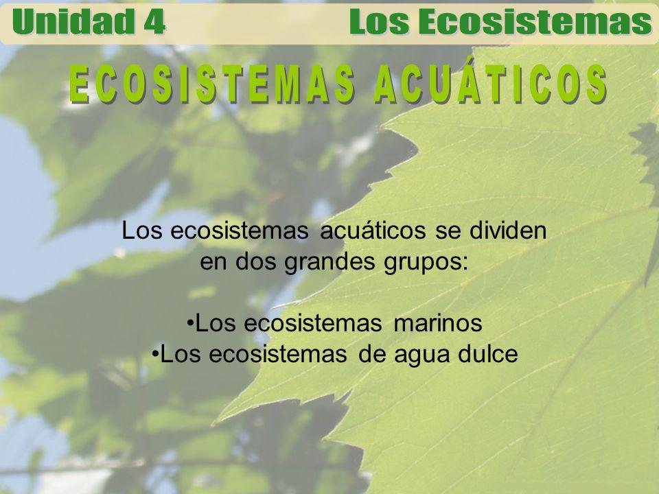 Los ecosistemas acuáticos se dividen en dos grandes grupos: Los ecosistemas marinos Los ecosistemas de agua dulce