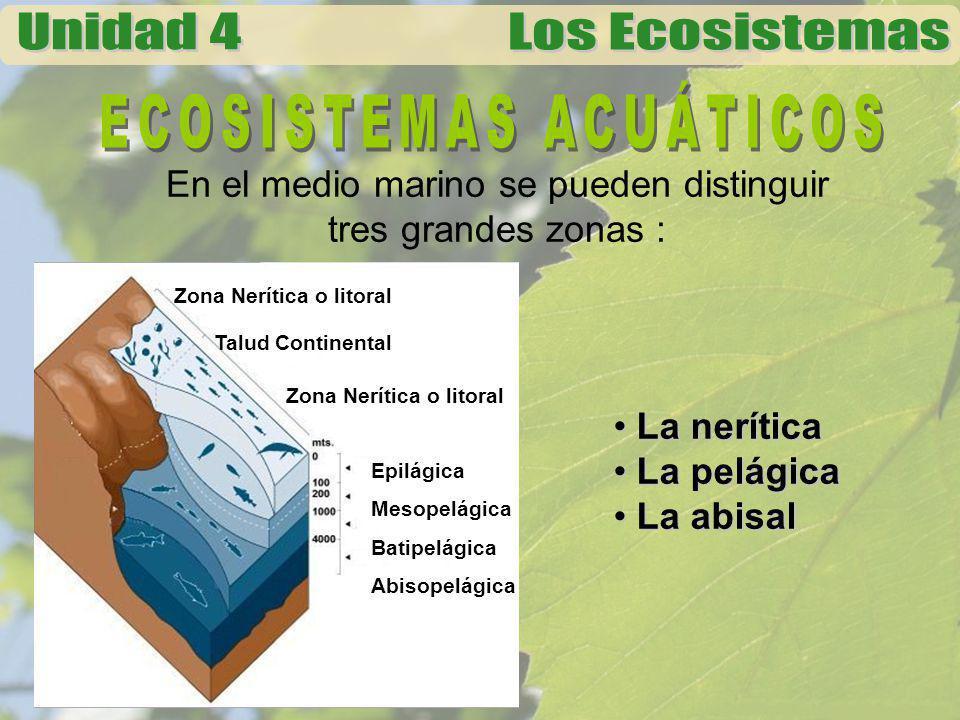 ZONA NERÍTICA En esta zona se localiza la plataforma continental que tiene una profundidad aproximada de 200 metros.
