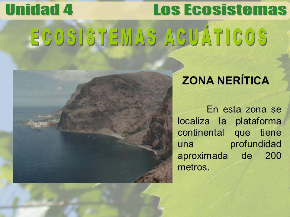 ZONA PELÁGICA Esta zona esta considerada dentro de los 200 a los 2000 metros de profundidad.