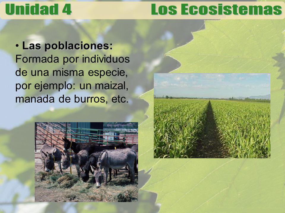 Las poblaciones: Las poblaciones: Formada por individuos de una misma especie, por ejemplo: un maizal, manada de burros, etc.