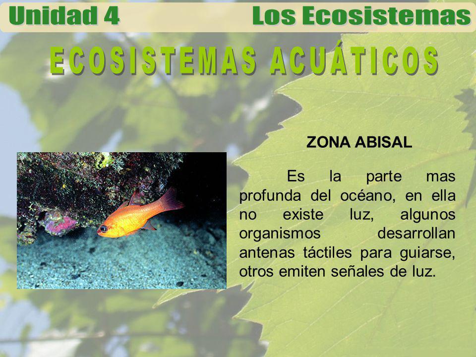 ZONA ABISAL Es la parte mas profunda del océano, en ella no existe luz, algunos organismos desarrollan antenas táctiles para guiarse, otros emiten señ