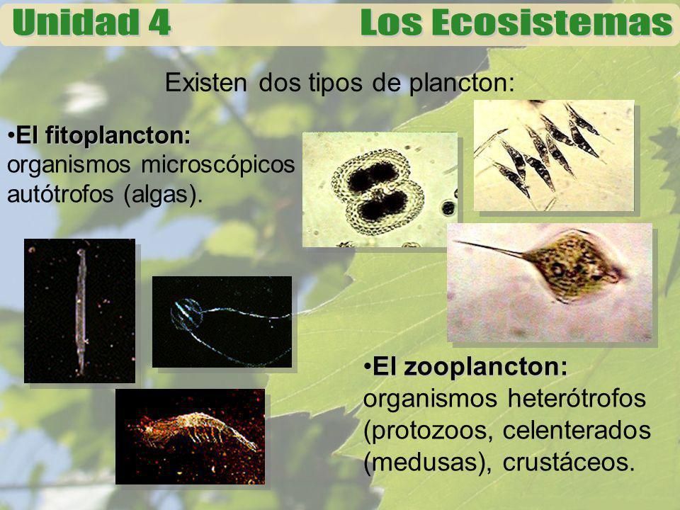 Existen dos tipos de plancton: El fitoplancton:El fitoplancton: organismos microscópicos autótrofos (algas). El zooplancton:El zooplancton: organismos