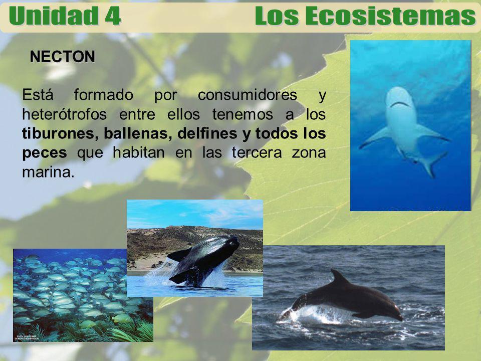NECTON Está formado por consumidores y heterótrofos entre ellos tenemos a los tiburones, ballenas, delfines y todos los peces que habitan en las terce
