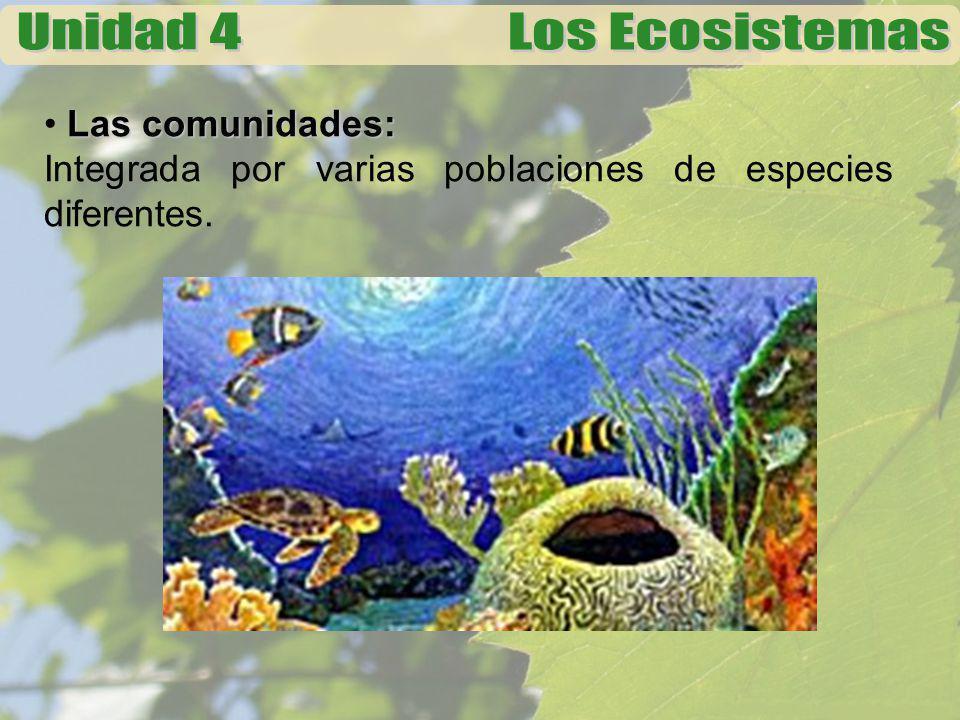 Las comunidades: Integrada por varias poblaciones de especies diferentes.
