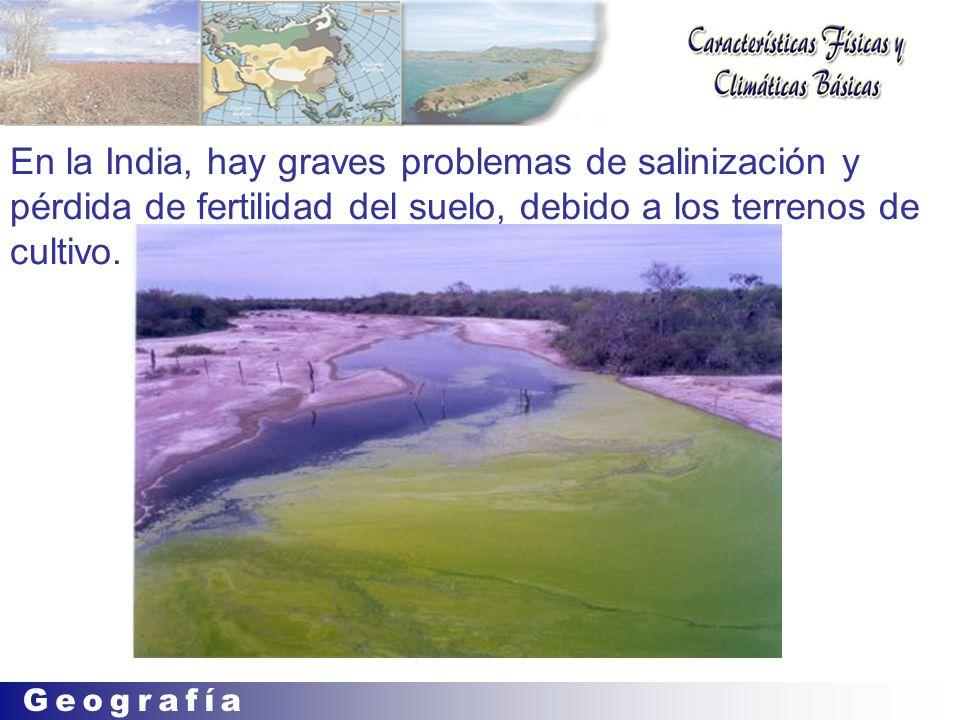 En la India, hay graves problemas de salinización y pérdida de fertilidad del suelo, debido a los terrenos de cultivo.