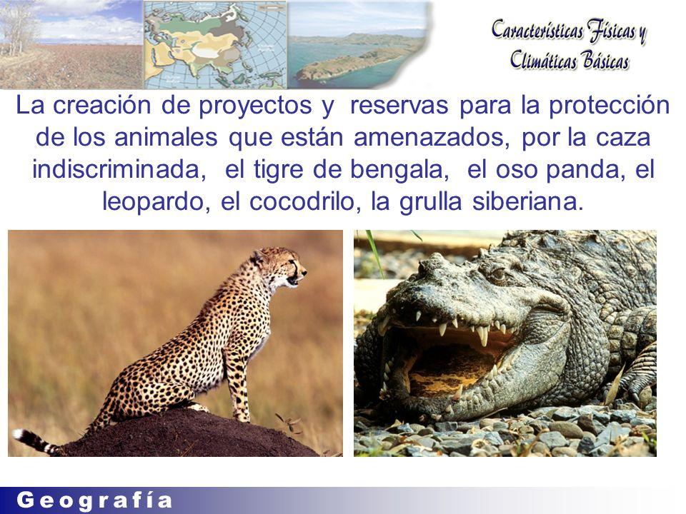La creación de proyectos y reservas para la protección de los animales que están amenazados, por la caza indiscriminada, el tigre de bengala, el oso panda, el leopardo, el cocodrilo, la grulla siberiana.
