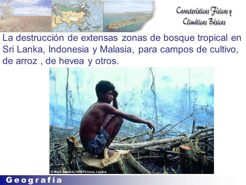La destrucción de extensas zonas de bosque tropical en Sri Lanka, Indonesia y Malasia, para campos de cultivo, de arroz, de hevea y otros.