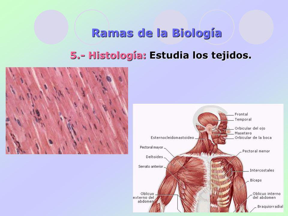 Ramas de la Biología 5.- Histología: Estudia los tejidos.
