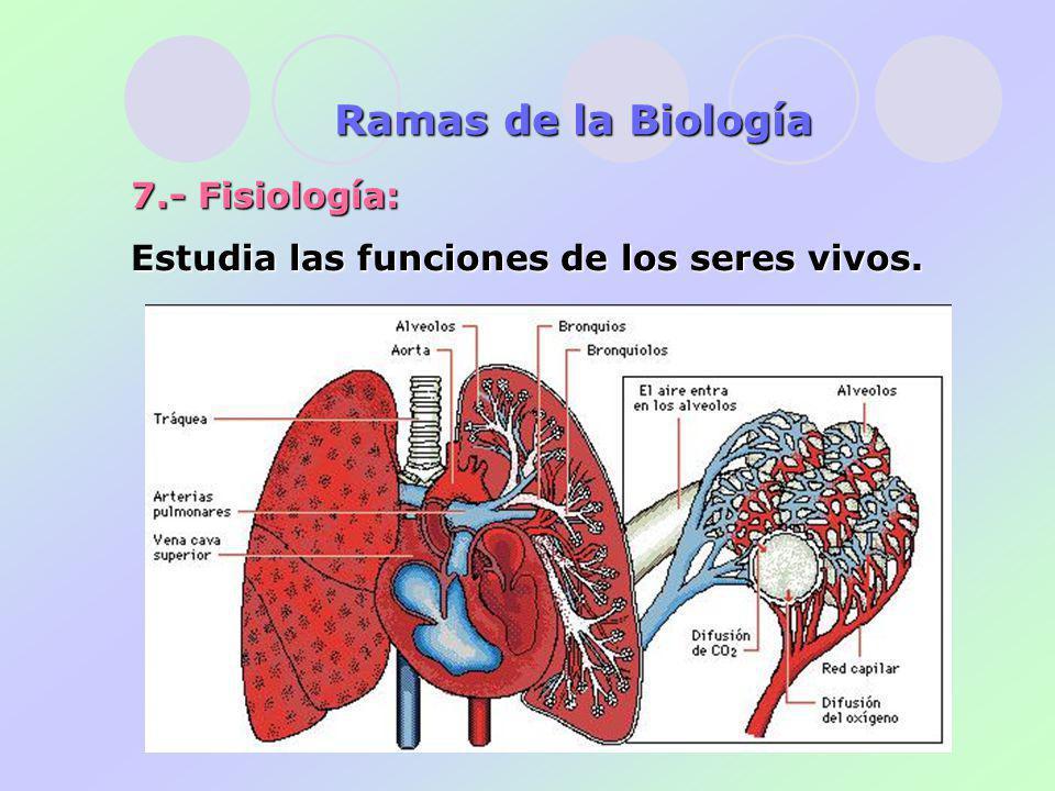 7.- Fisiología: Estudia las funciones de los seres vivos. Ramas de la Biología