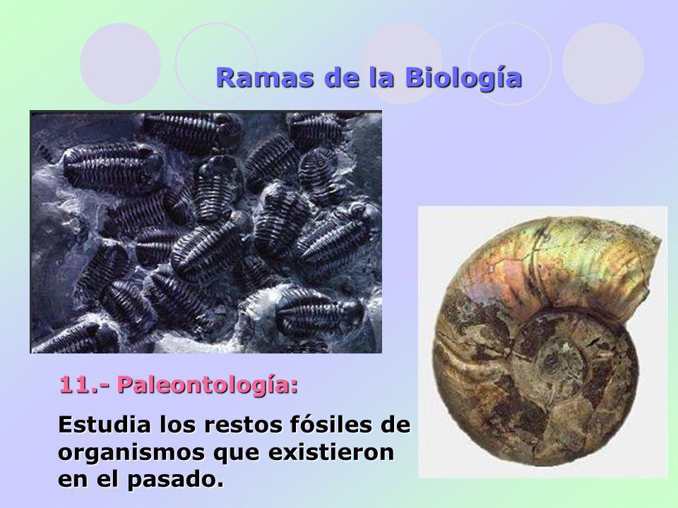11.- Paleontología: Estudia los restos fósiles de organismos que existieron en el pasado.