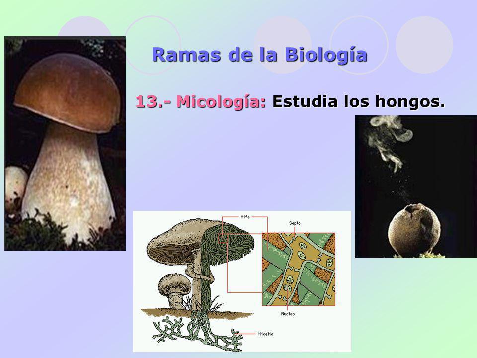 13.- Micología: Estudia los hongos. Ramas de la Biología