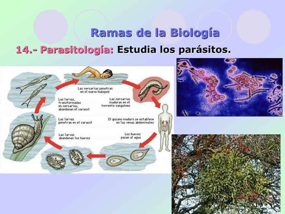 14.- Parasitología: Estudia los parásitos. Ramas de la Biología