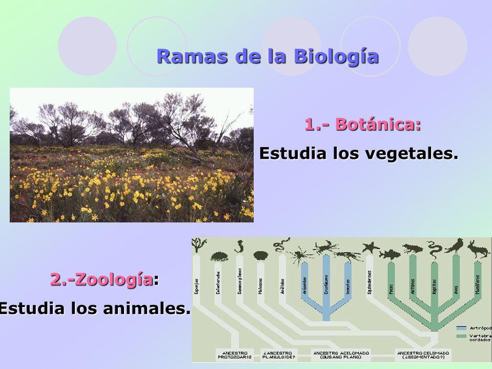 1.- Botánica: Estudia los vegetales. 2.-Zoología: Estudia los animales. Ramas de la Biología